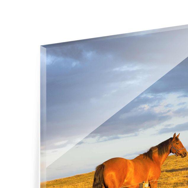 Produktfoto Glasbild - Feldstraße und Pferde bei Abendsonne - Quadrat 1:1