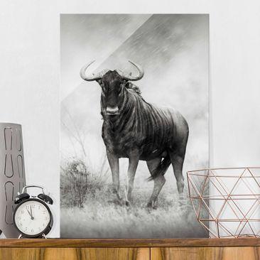 Produktfoto Glasbild - Staring Wildebeest - Hoch 3:2