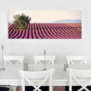 Produktfoto Glasbild - Lavender - Panorama Quer