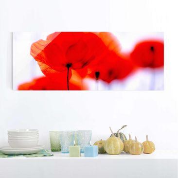 Produktfoto Glasbild - Magic Poppies - Panorama Quer...