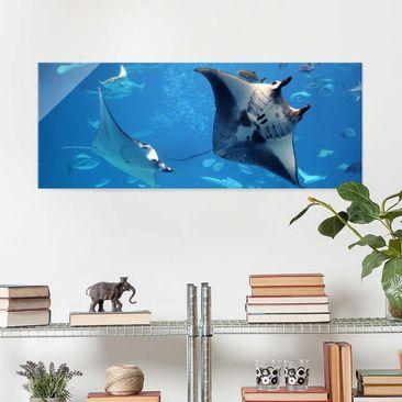 Produktfoto Glasbild - Manta Ray - Panorama Quer