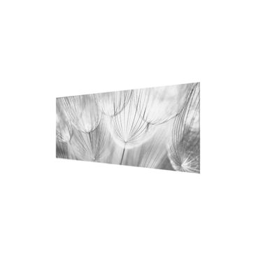 Product picture Print on Glass - Dandelions macro shot...