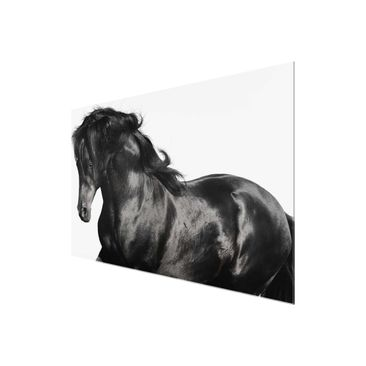 Product picture Glass Print - Arabian stallion - Glass...