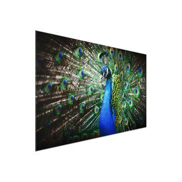Product picture Glass Print - Precious Peafowl - Glass...