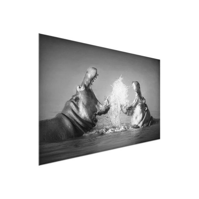Produktfoto Glasbild - Hippo Fight - Quer 2:3
