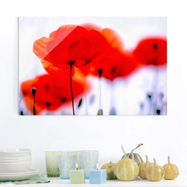 Produktfoto Glasbild - Magic Poppies - Quer 2:3 - Blumenbild Glas