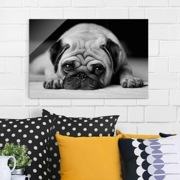 Product picture Glass Print - Pug Loves You II - Glass...