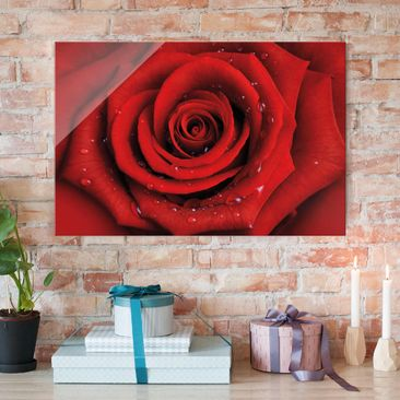 Produktfoto Glasbild - Rote Rose mit Wassertropfen - Quer 2:3 - Blumenbild Glas