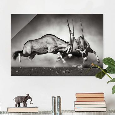 Product picture Glass Print - Feral - Glass Wall Art...