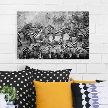 Product picture Glass Print - Zebra herd II - Glass Wall...