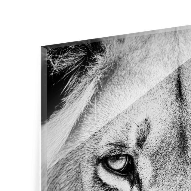 Produktfoto Glasbild - Alter Löwe - Hoch 4:3
