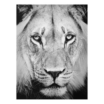 Product picture Print on Glass - Old lion - Glass Wall...