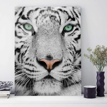 Product picture Print on Glass - White Tiger - Glass...