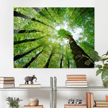 Product picture Glass Print - Trees of Life - Glass Wall...