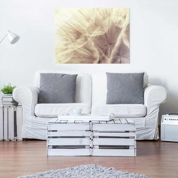 Product picture Glass Print - Detailed Dandelions macro...