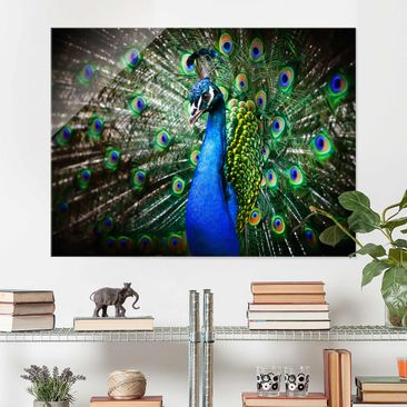 Product picture Glass Print - Precious Peafowl - Glass...