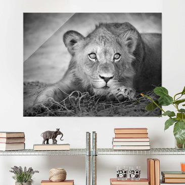 Produktfoto Glass Print - Lurking Lionbaby - Glass...