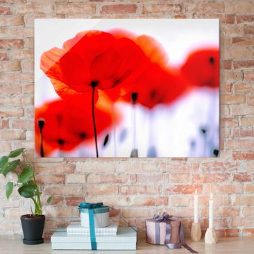 Produktfoto Glasbild - Magic Poppies - Quer 3:4 - Blumenbild Glas