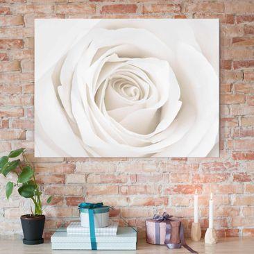 Produktfoto Glasbild - Pretty White Rose - Quer 3:4 - Blumenbild Glas