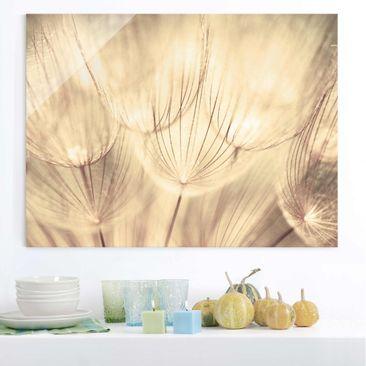 Produktfoto Glasbild - Pusteblumen Nahaufnahme in...