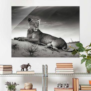 Immagine del prodotto Quadro in vetro - Resting Lion - Orizzontale 3:4