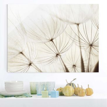 Product picture Glass Print - Gentle Grasses - Glass...