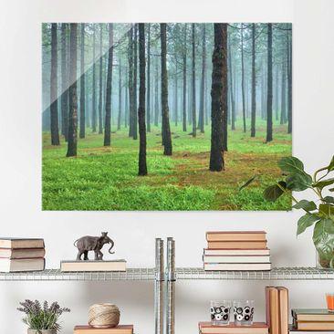 Produktfoto Glasbild Wald - Tiefer Wald mit Kiefern auf La Palma - Waldbild Quer 3:4