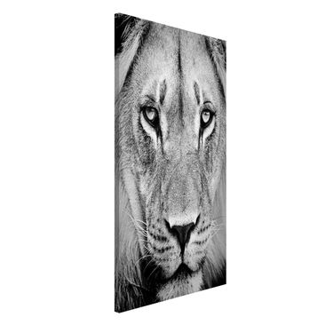 Produktfoto Magnettafel - Alter Löwe - Memoboard Hoch 4:3