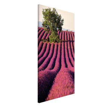 Produktfoto Magnettafel - Lavender - Memoboard Hoch...
