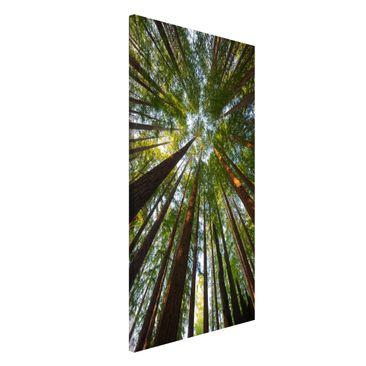 Immagine del prodotto Lavagna magnetica - Sequoia Tree Tops -...