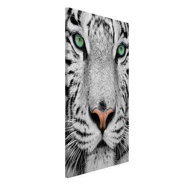 Produktfoto Magnettafel - Weißer Tiger - Memoboard Hoch 4:3