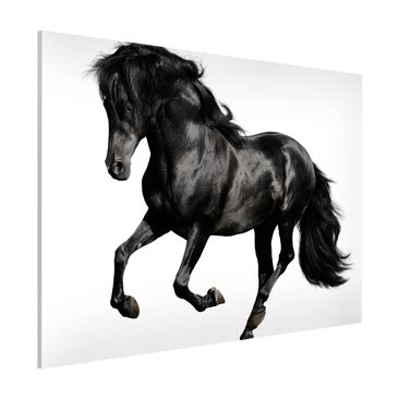 Product picture Magnetic Board - Arabian Stallion -...