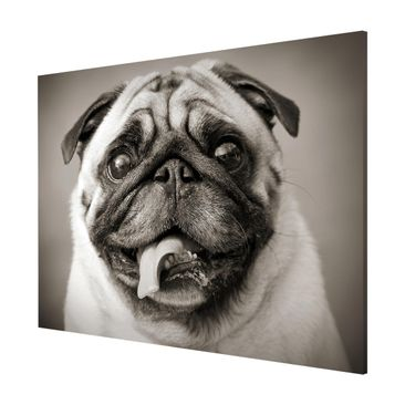 Product picture Magnetic Board - Funny Pug - Landscape...