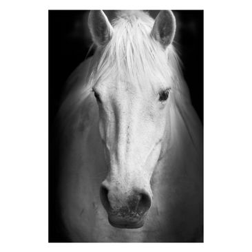 Product picture Magnetic Board - Dream Of A Horse -...