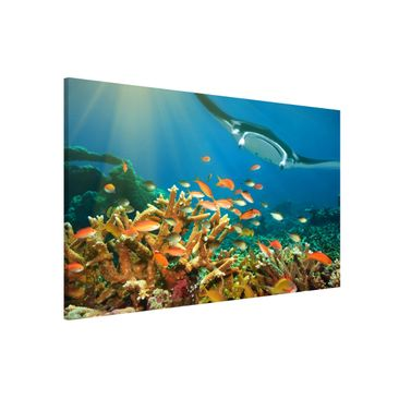 Immagine del prodotto Lavagna magnetica - Coral Reef - Formato orizzontale