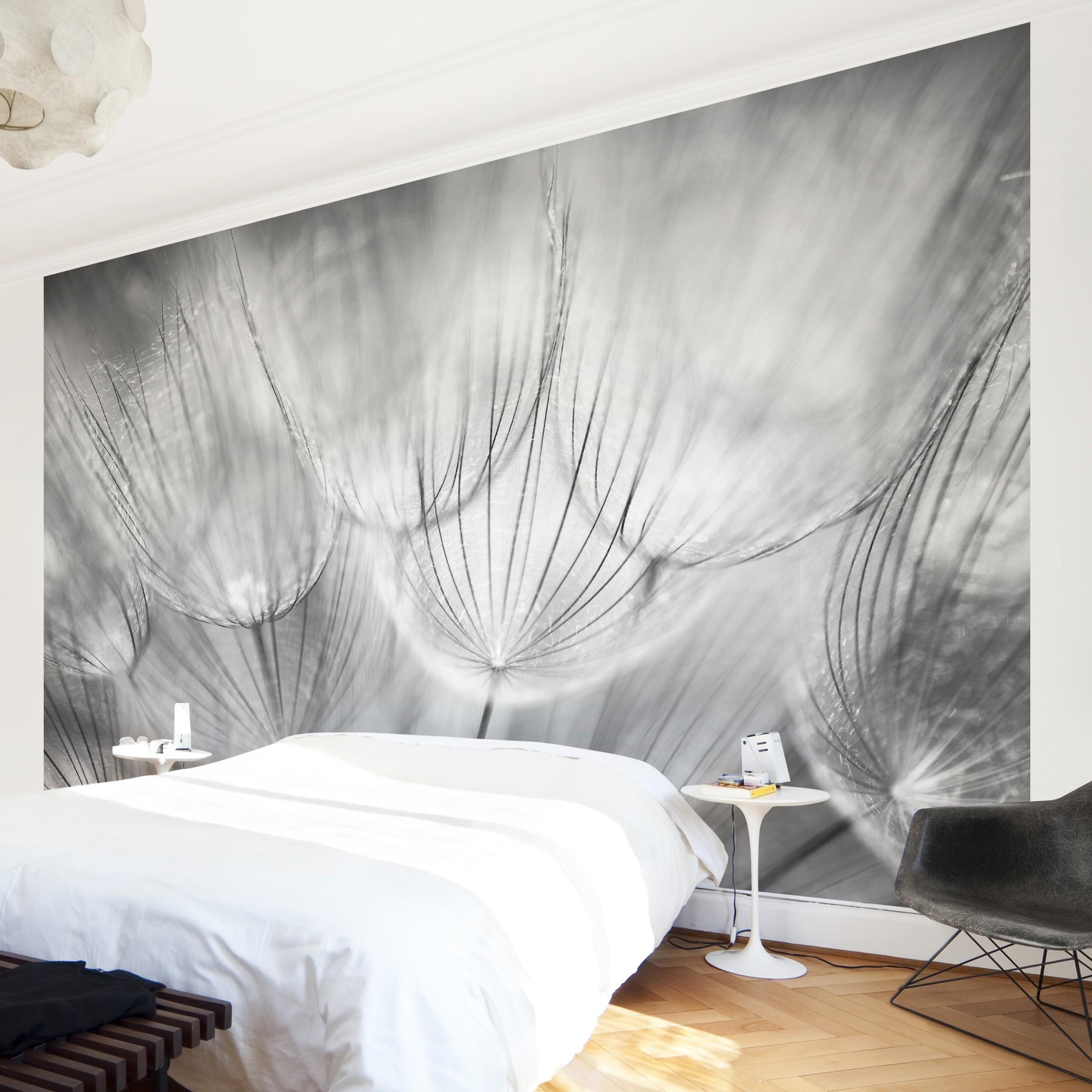 selbstklebende fototapete pusteblumen makroaufnahme in schwarz weiss. Black Bedroom Furniture Sets. Home Design Ideas