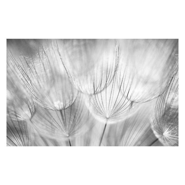 Produktfoto Selbstklebende Fototapete - Pusteblumen Makroaufnahme in schwarz weiss