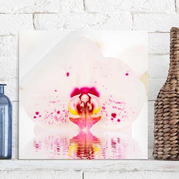 Produktfoto Glasbild - Gepunktete Orchidee auf Wasser - Quadrat 1:1