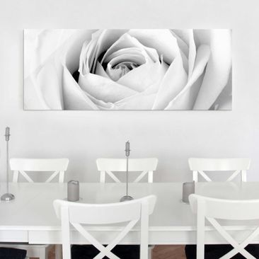 Produktfoto Glasbild - Close Up Rose - Panorama Quer