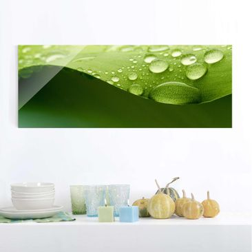 Produktfoto Glasbild - Drops of Nature - Panorama Quer