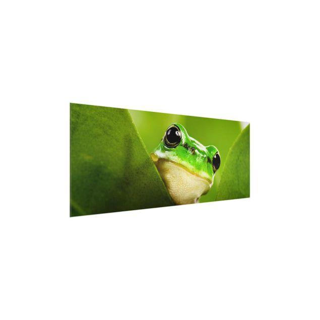Produktfoto Glasbild - Wetterfrosch - Panorama Quer