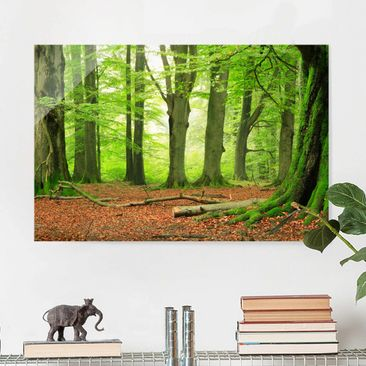 Produktfoto Glasbild - Mighty Beech Trees - Quer 2:3
