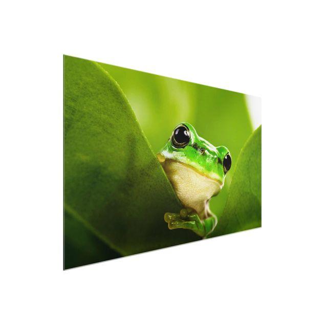 Produktfoto Glasbild - Wetterfrosch - Quer 2:3