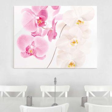 Produktfoto Glasbild - Delicate Orchids - Quer 3:4