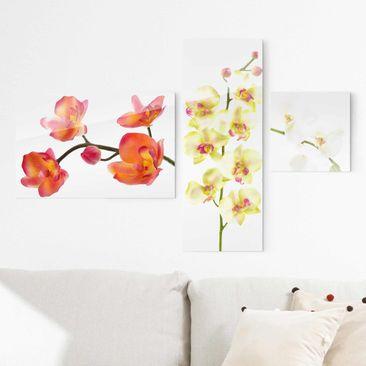 Produktfoto Glasbild mehrteilig - Orchideen Collage 3-teilig