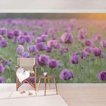 Produktfoto Selbstklebende Mohnblumen Fototapete - Violette Schlafmohn Blumenwiese im Frühling
