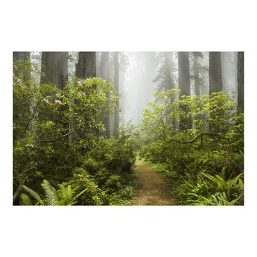 Product picture Photo Wall Mural Misty forest path