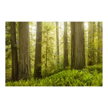 Product picture Photo Wall Mural Redwood State Park...