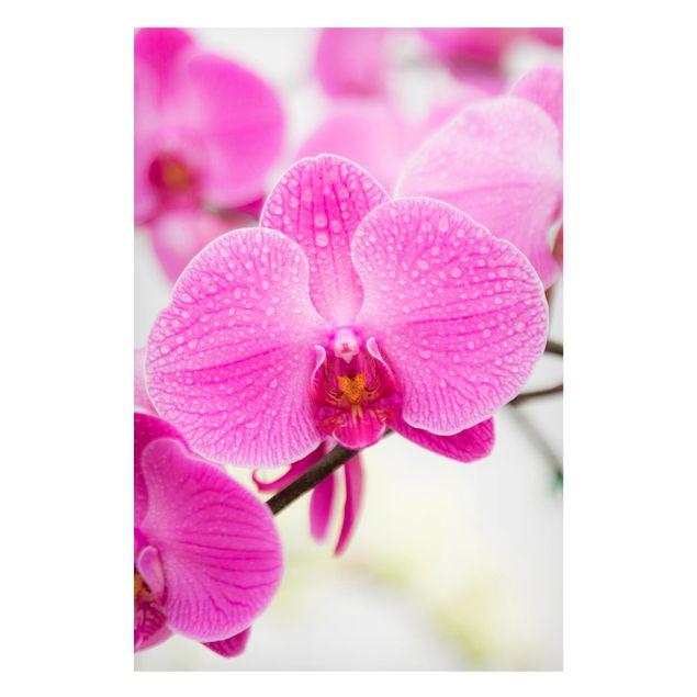 Produktfoto Magnettafel - Nahaufnahme Orchidee -...