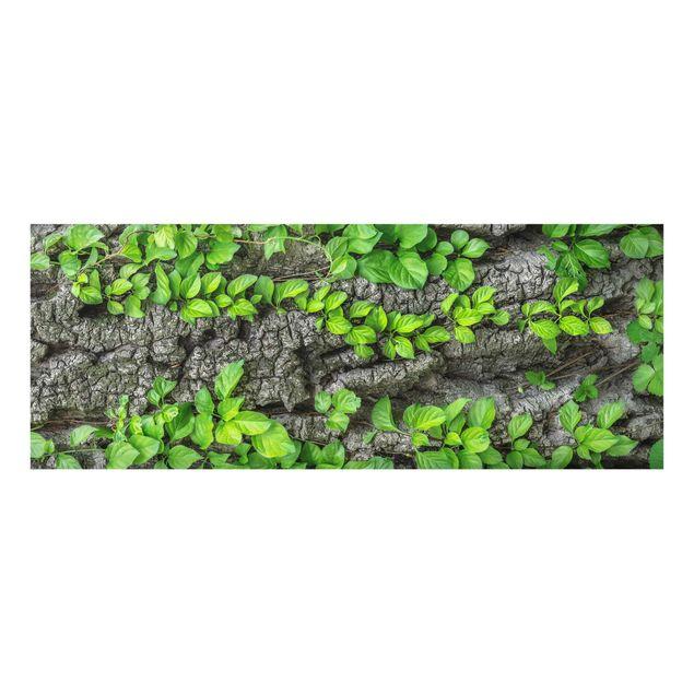 Produktfoto Glasbild - Efeuranken Baumrinde -...